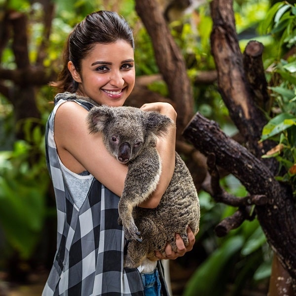 Parineeti with Koala.Indian Link