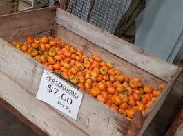 Persimmon.Indian Link