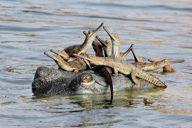 Mother's little headful, Udayan Rao Pawar (India) – Young Wildlife Photographer of the Year 2013