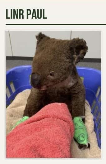 koala LINR Paul