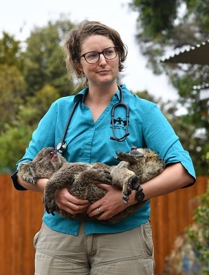 koala adoption