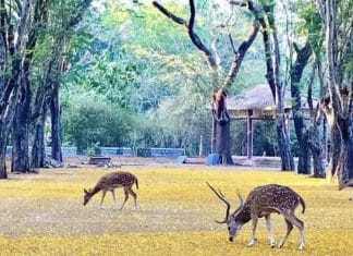 Lack of humans, traffic, and noise brings wildlife to India's towns and cities amid the lockdown