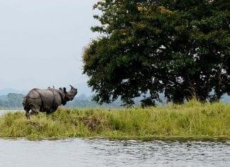 Floods in Assam