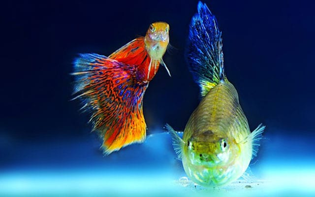 ornamental fish reach bangalore
