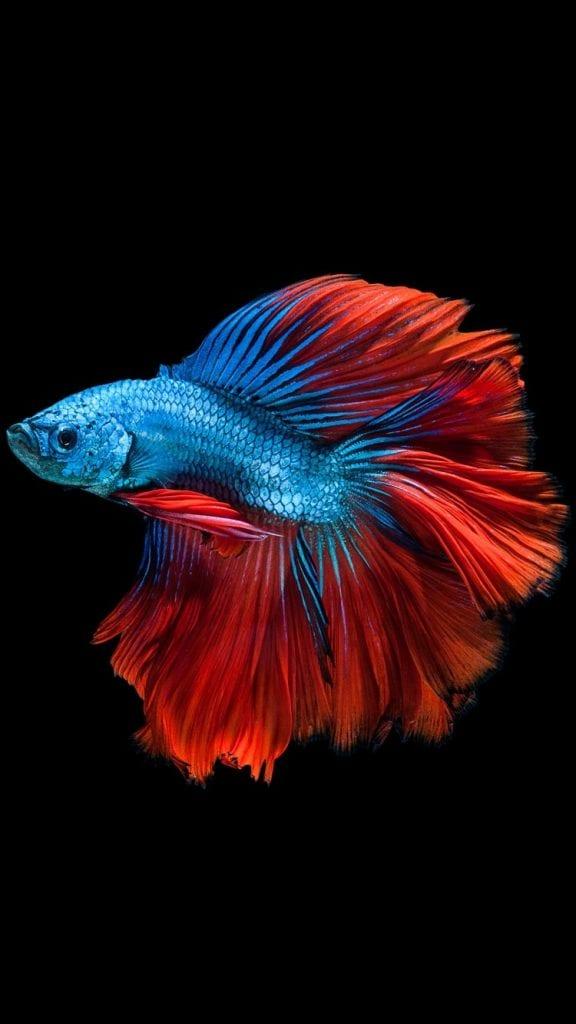 fish consignment