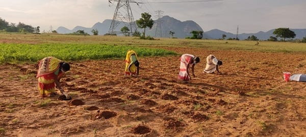 Indian farmers to receive $4.5 million aid from the Walmart foundation. Indian women farmers planting crops.