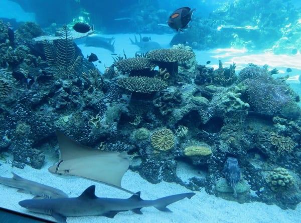 Aquarium Sea World gold coast