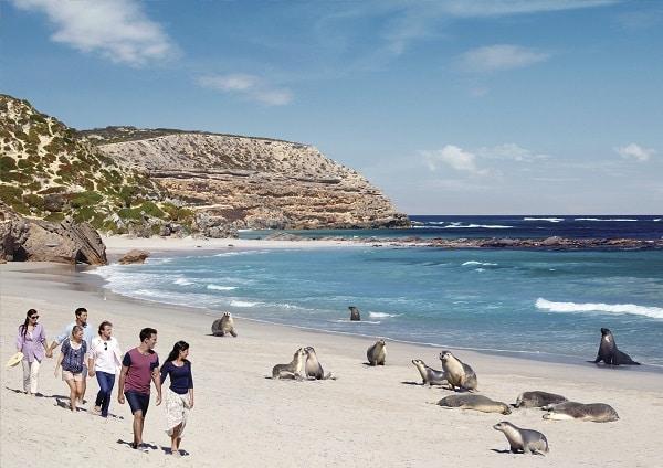 Seal Bay Conservation Park. Source: South Australia Tourism Commission