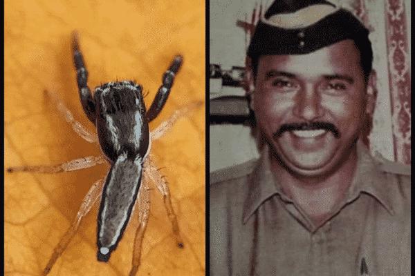 Spider species names after Tukaram Omble