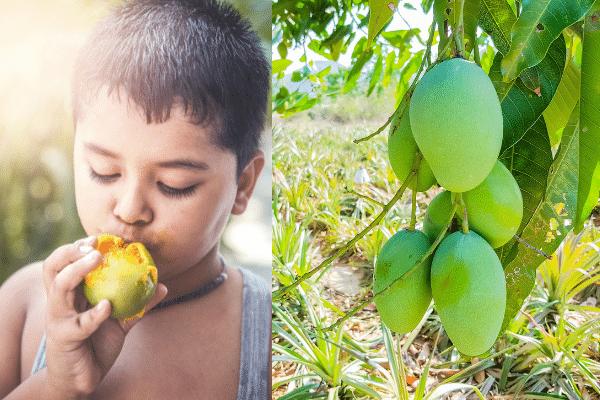 Child relishing mango variations