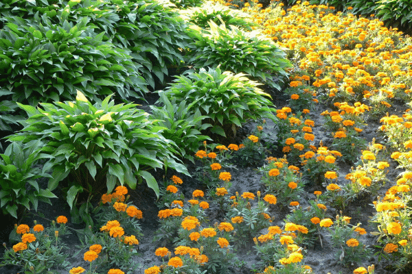 Flower bed. Source: Supplied