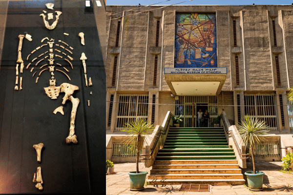 Lucy (Australopethicus aferensis) at the National Museum of Ethiopia in Addis Ababa. Source: Flickr